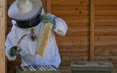 Een avondje Bijenhoek
