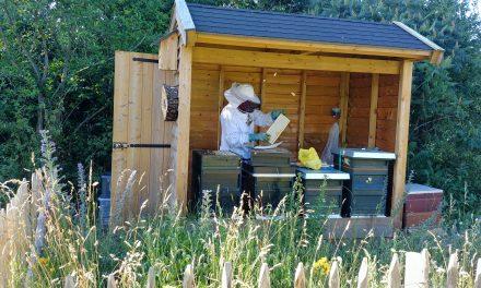 Aanstaande zondag 14 juli van 11.00 – 15.00 uur Natuurmarkt in de bijenhoek.