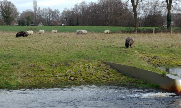 Een Mergellander in het twentse landschap