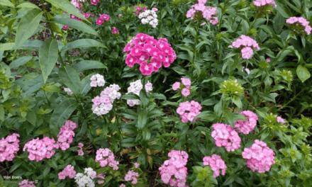 Tuinplanten voor de Bijenhoek