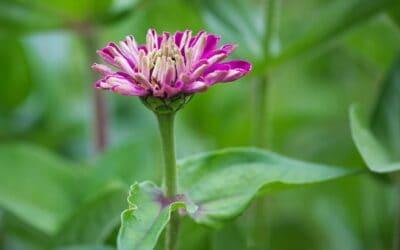 De bloemenhoek in de Bijenhoek