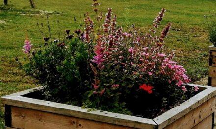 Bloemenbakken Graeshoek zien er weer mooi uit