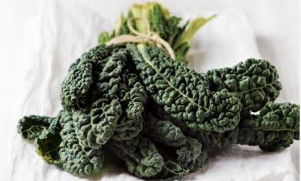 Een vergeten groente: Palmkool