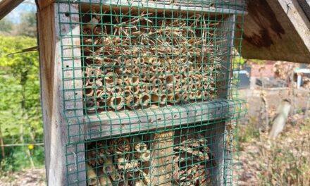 Een insectenhotel